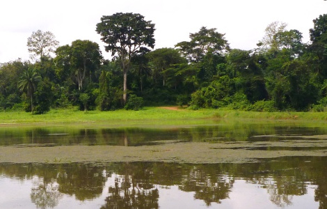 Nigeria Holidays and Travel Guide - IITA Forest Reserve