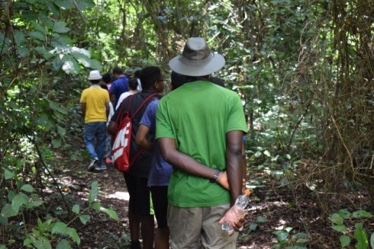 Walking on the IITA forest trail